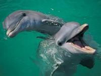 Image: The Dolphins & Whales in the Gibraltar Straits