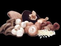 Image: The season for Mycophiles