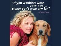 Image: Is it a dogs life - И это собачья жизнь - Vida de perros