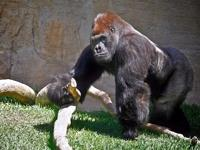 Zoo Fuengirola a family fun day