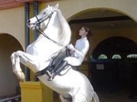 The Feria del Caballo 2005 Jerez de la Frontera