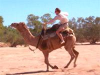 Image: Race to Marrakech