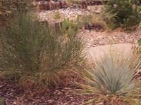 Image: Your Spanish Garden
