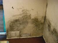Cure mouldy internal walls