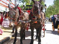 Image: Fiestas & Ferias - Andalucia Life
