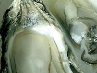 This Month's Recipe: Oysters in Champagne Sauce