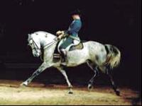 HORSES & MUSIC SHOW·