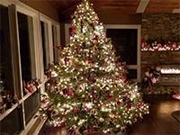 The Christmas Tree origin